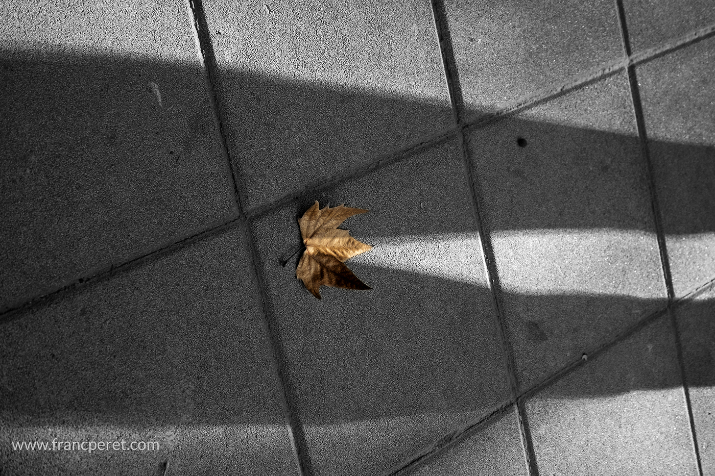 One of my student standing there, his shadow reaching a leave and the magic just happened.