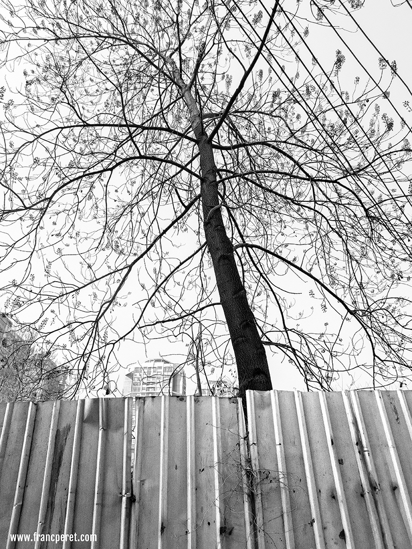 On the black and white version, lines and patterns with sharp contrast from the tree branches and the palissade are taking other as color is not part of the message anymore.