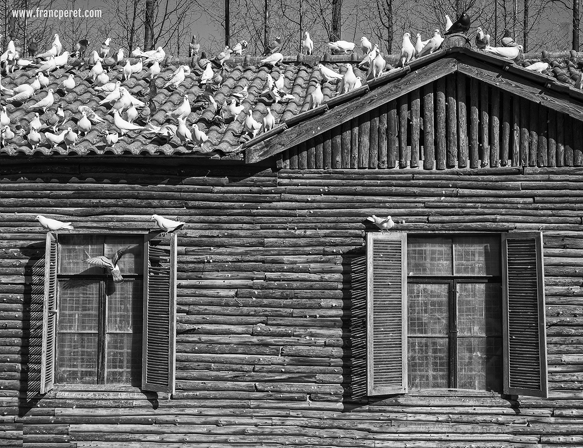 Pigeon House in Shanghai Century Park. Some material such as leather, rusted iron and wood are gold mine for textured pictures.