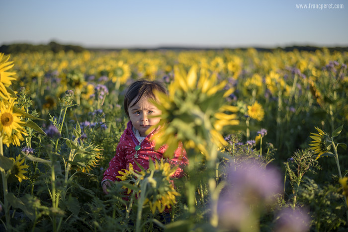 Apolline in Sunflower field. Grabbing special moments quickly, with the right exposure and focus, while Composing the shot the best you can is the basic need of photography.